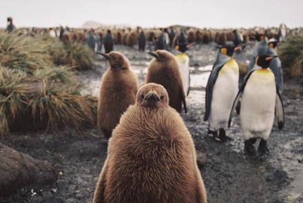 35mm Antarctica Film - For Web 72dpi-7.j