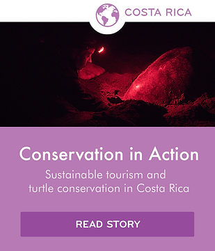 Local stories icon - Corcovado (purple)-
