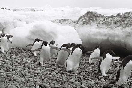 35mm Antarctica Film - For Web 72dpi-16.