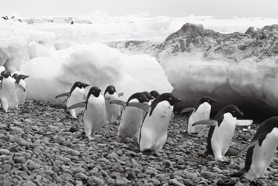35mm Antarctica Film - For Web 72dpi-16.
