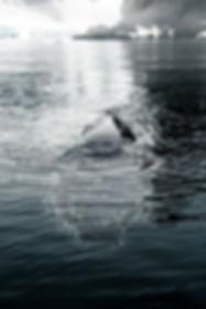 Antarctica website 72dpi.jpg