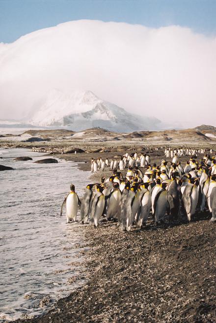 35mm Antarctica Film - For Web 72dpi-2.j