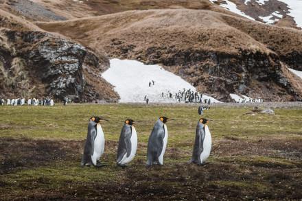Antarctica- For Web 72dpi-6.jpg