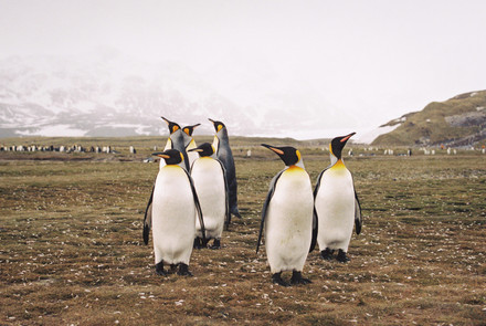 35mm Antarctica Film - For Web 72dpi-6.j