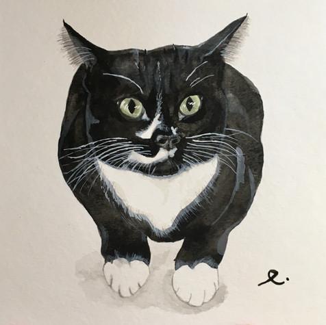 Suzy Meow Meow
