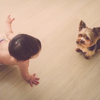 baby brincando com cachorro