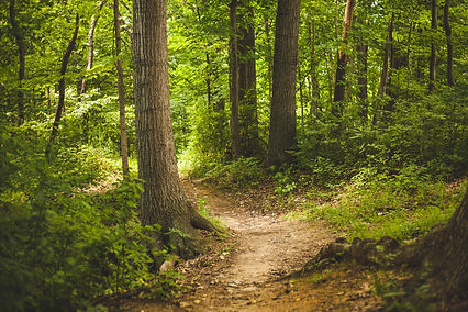 forest-1868028.jpg