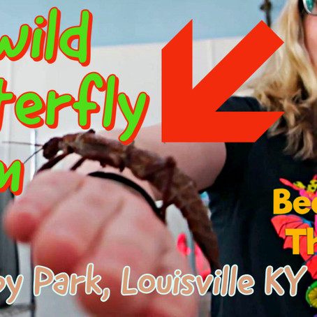Idlewild Butterfly Farm - experience innovative urban insect farming