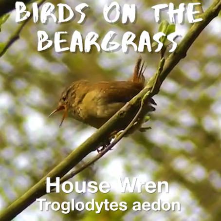 House Wren: Birds on the Beargrass