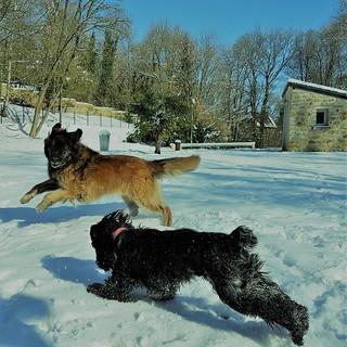 On adore la neige à la campagne