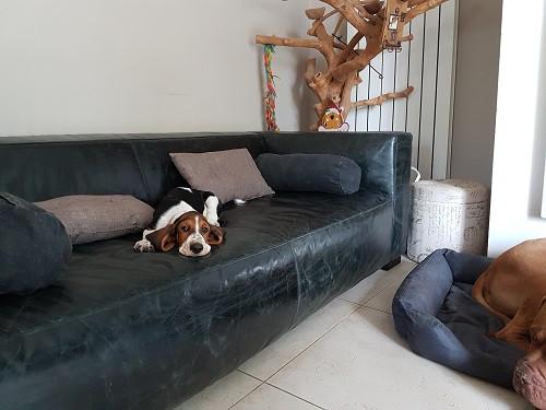 La sieste sur le canapé