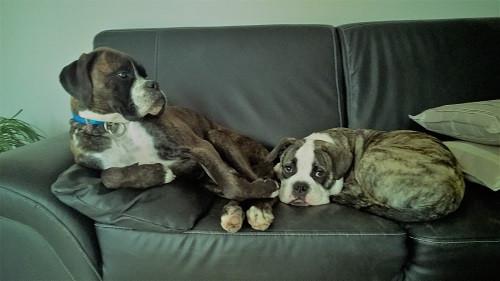 Confortable le canapé