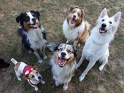 Pension pour chiens en liberté