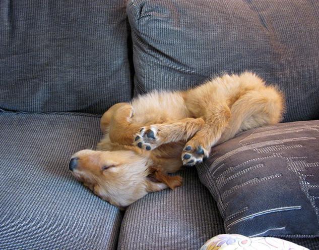 Au fond du canapé