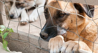 adopter-un-chien-a-donner.jpg