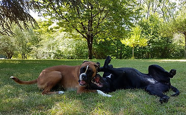 Garde chiens en liberté
