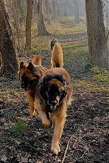 Pension pour chiens sans cage