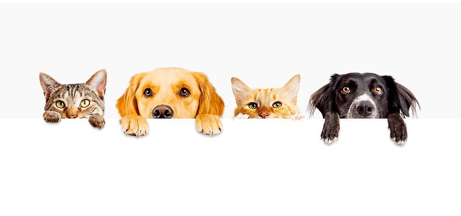 cats adn dogs.jpg