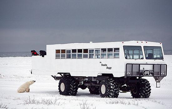 bear-visits-tundra-buggy.jpg