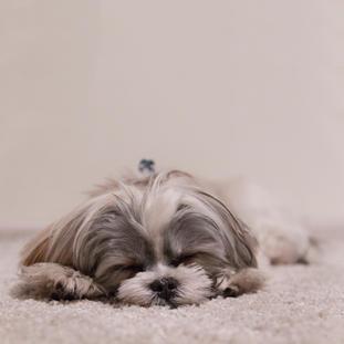 פנסיון כלבים