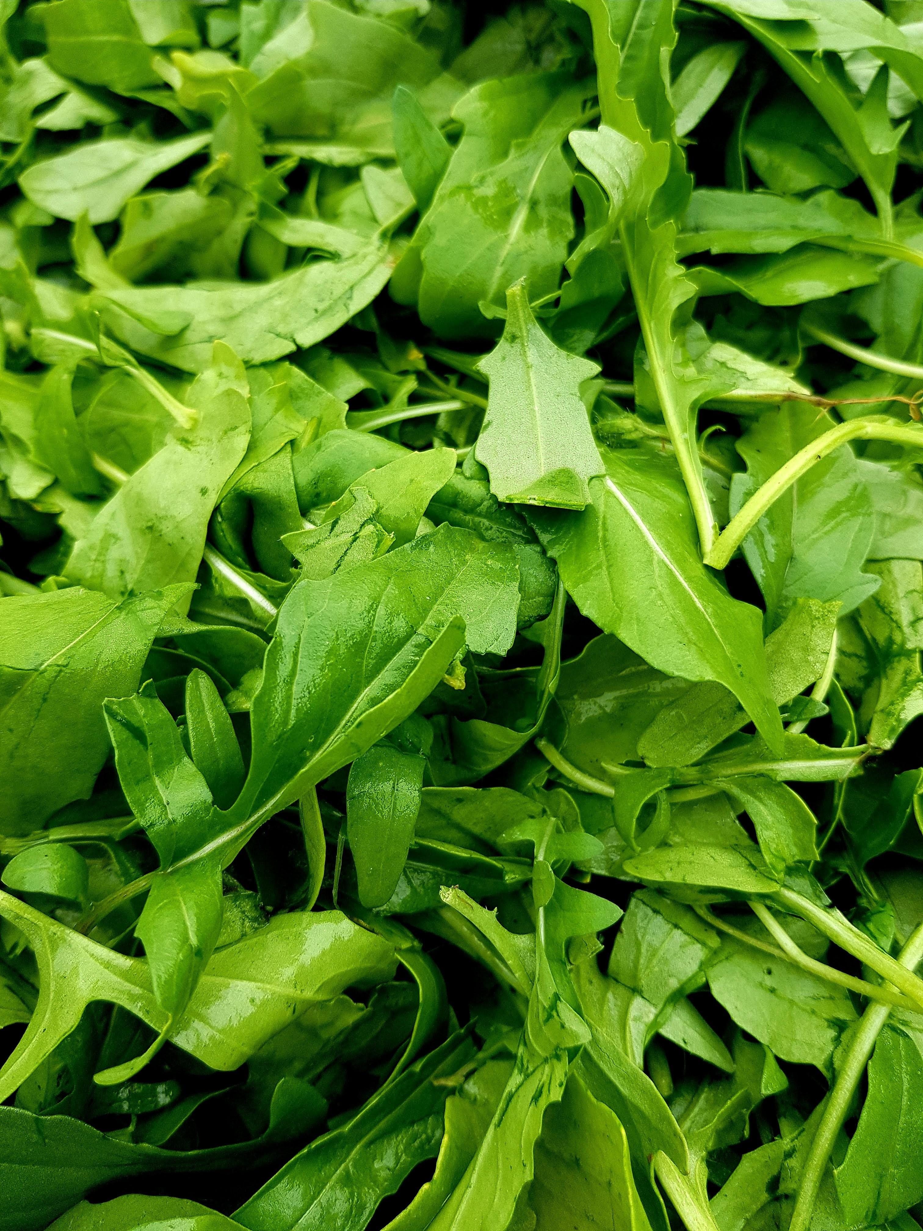 bio zöldség -rukkola