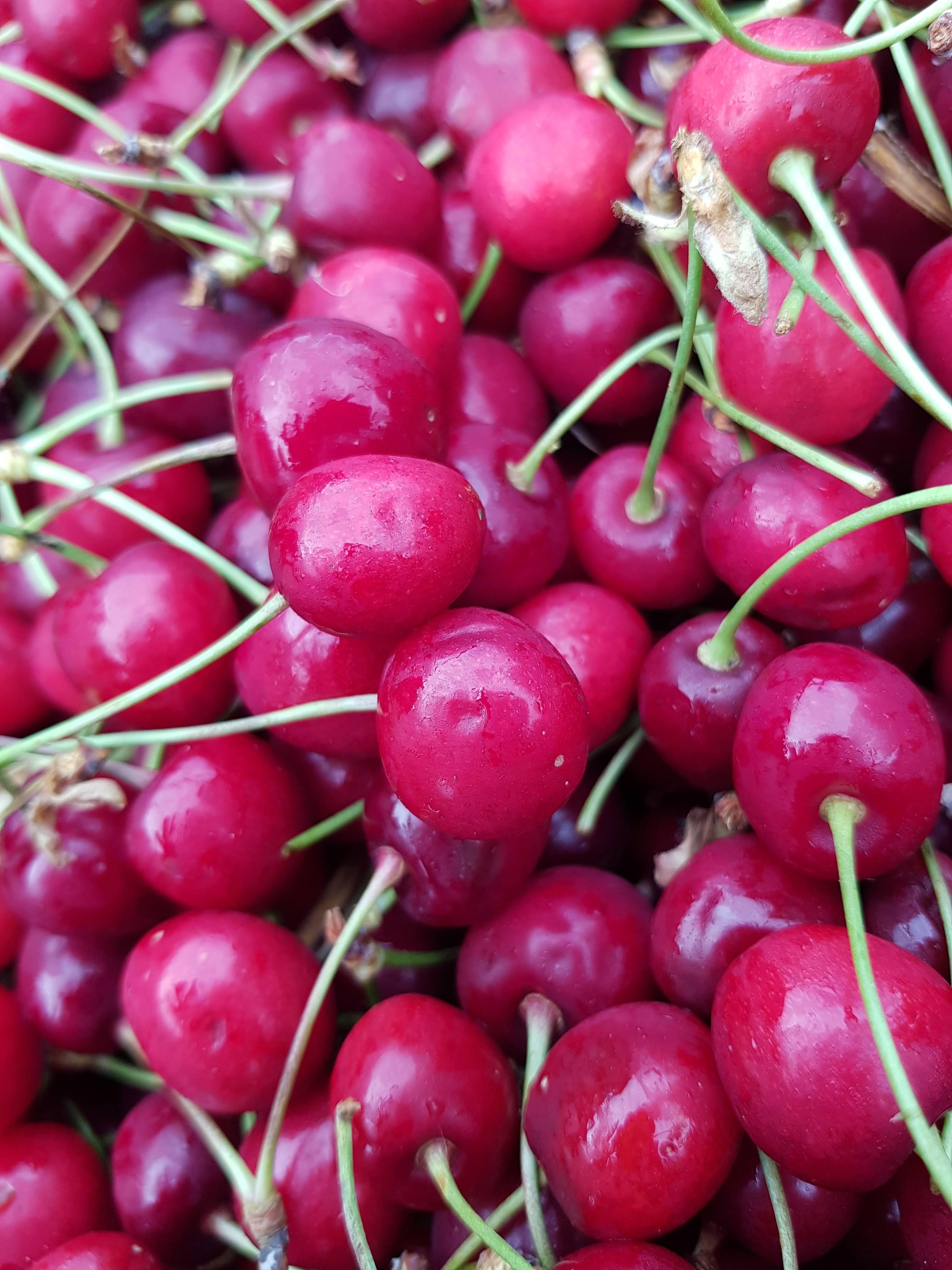 bio gyümölcs -meggy