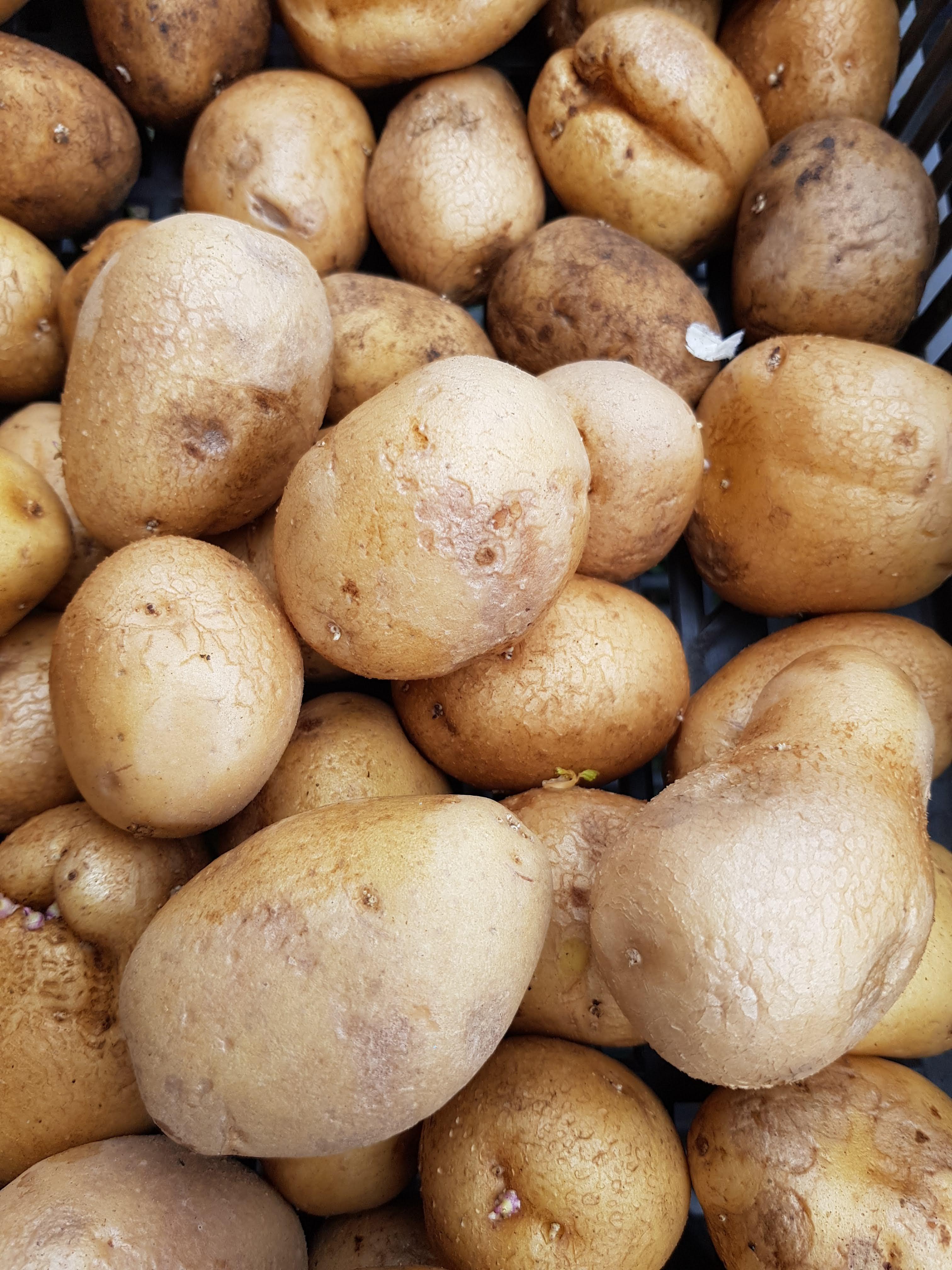 bio zöldség -burgonya