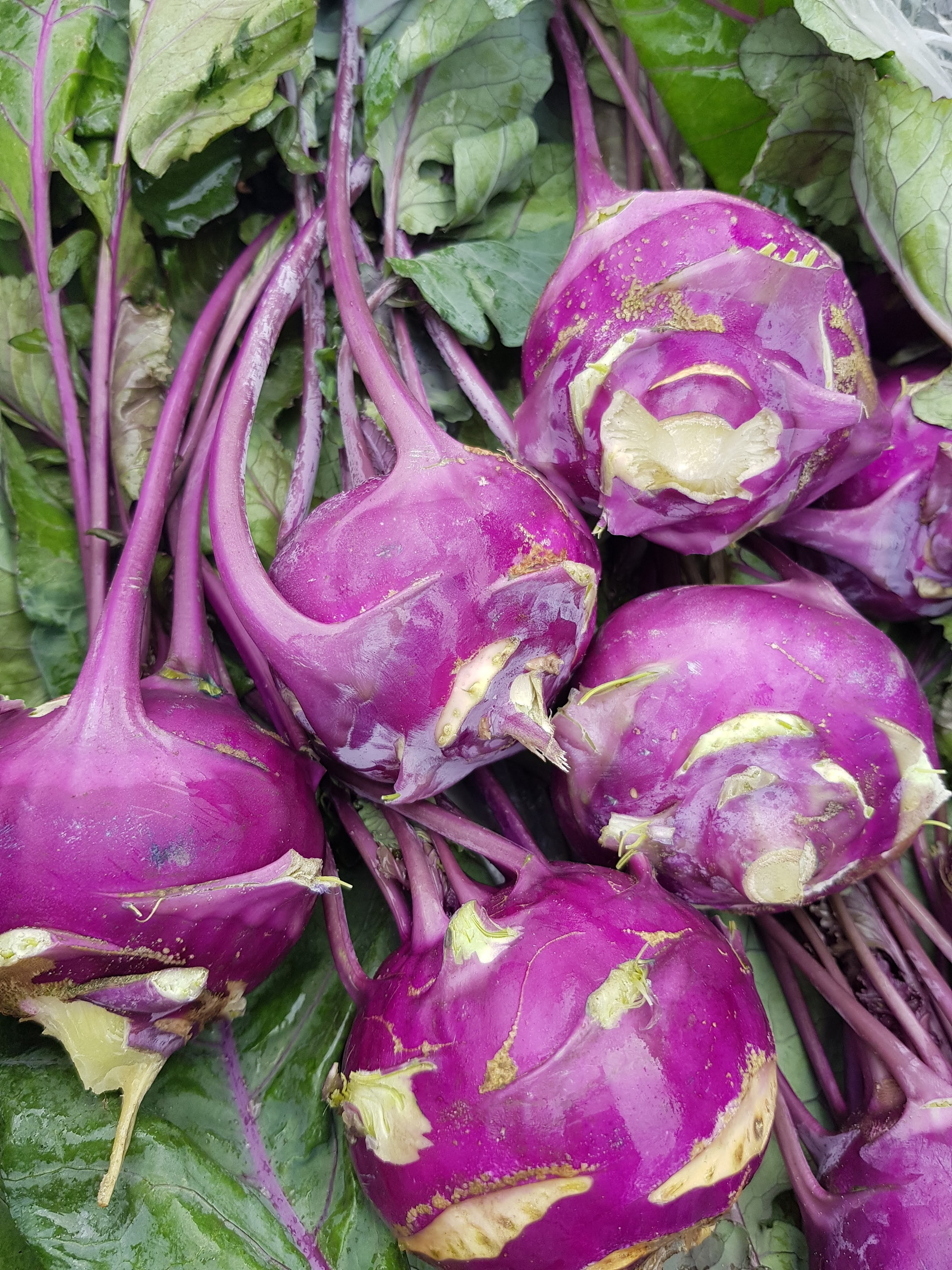 bio zöldség -karaláb