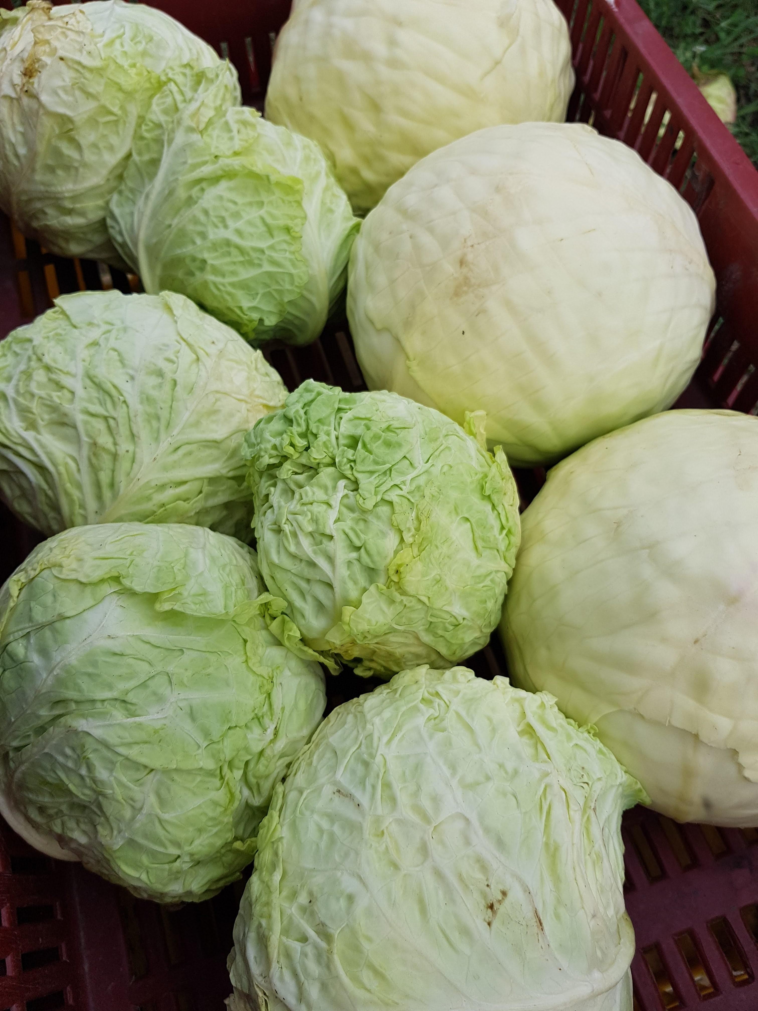 bio zöldség -kelkáposzta