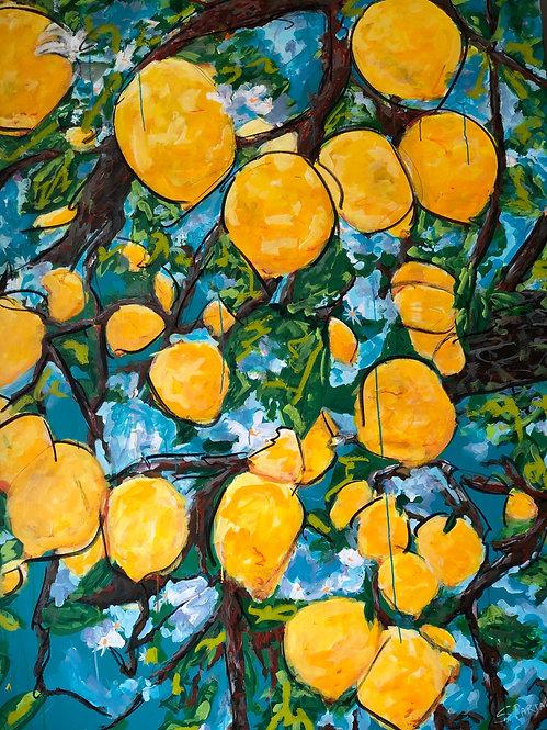 Barga Lemon Drop
