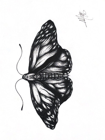 butterflysketch.jpg