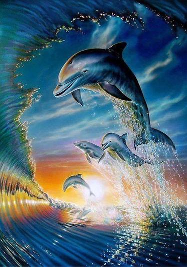 Dolphin Play.jpg
