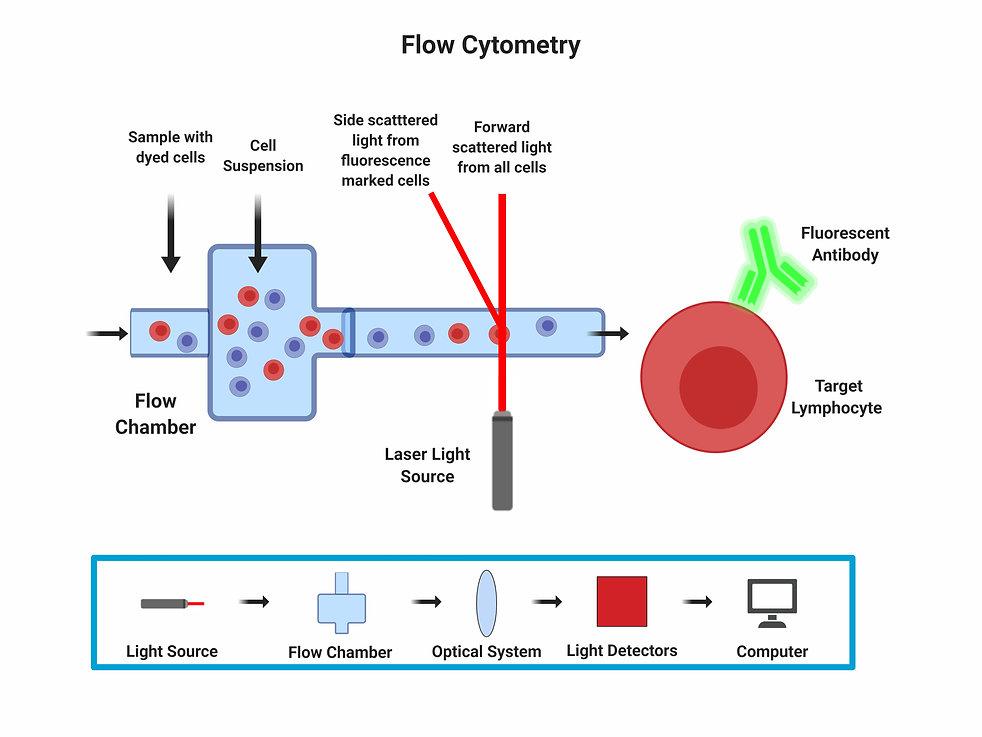 Flow Cytometry.jpeg