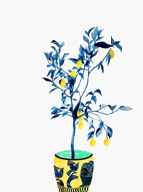 Clandestine Lemons