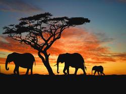 africa 3 II