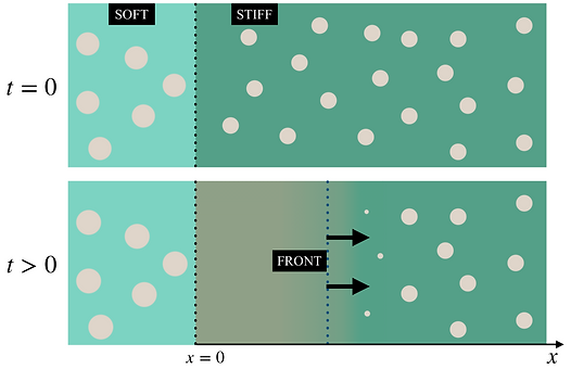 front propagation in phase separating elastic medium