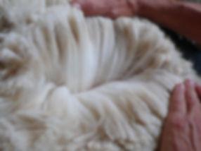 Alpagas du Quercy élevage avec atelier laine, toison brute, cardage,  filage tissage