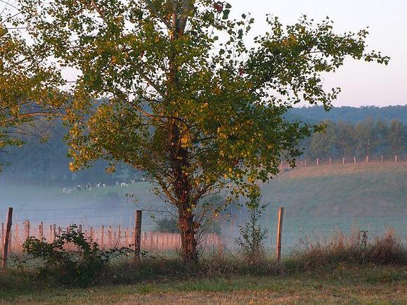 visite découverte Alpagas du Quercy dans le Lot