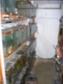 SmallFishroom.jpg