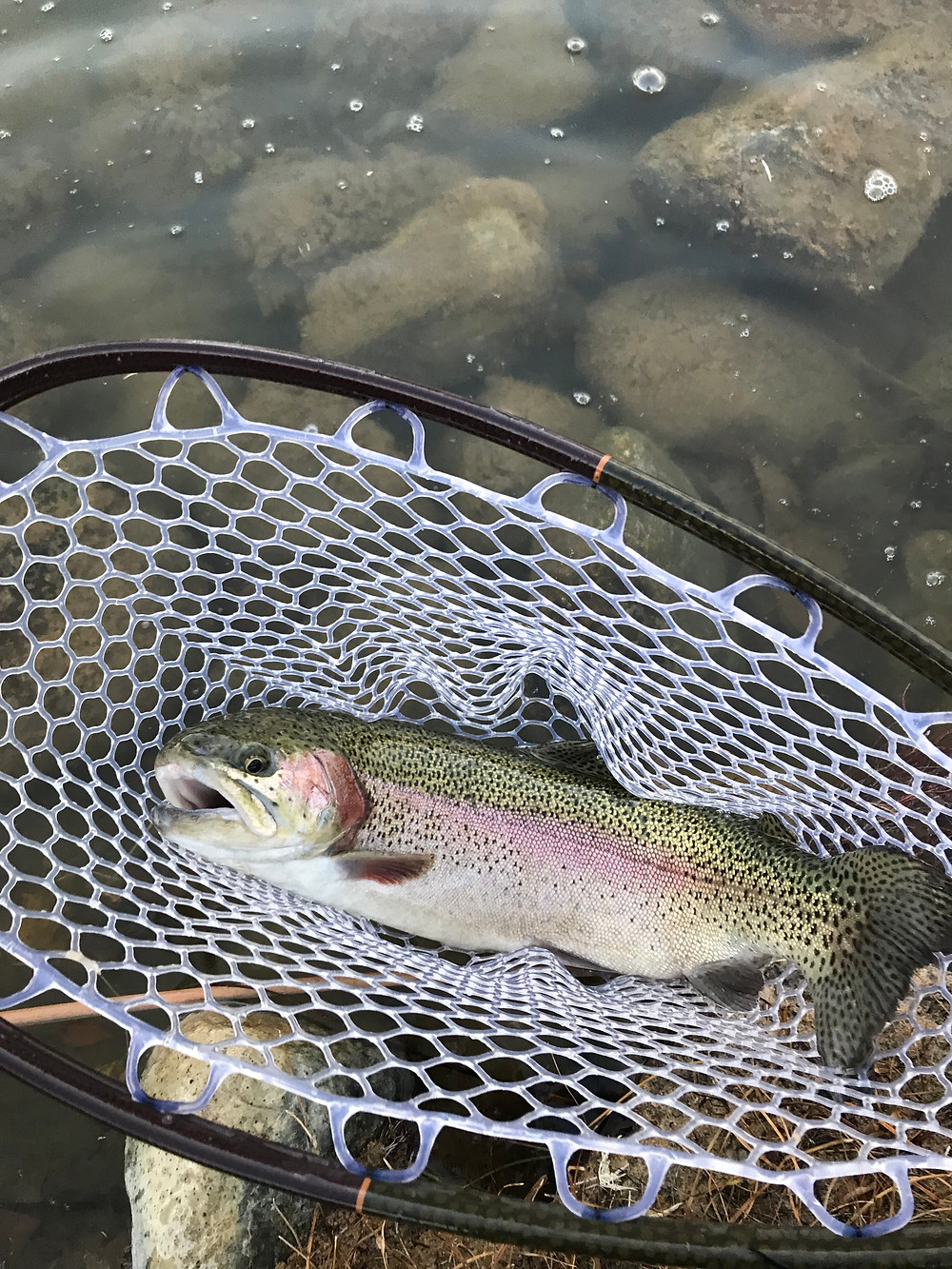 Trout, Rainbow Trout, Fly Fishing