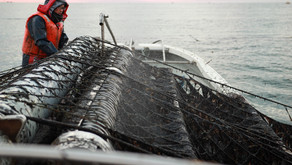 NTTドコモ社東北復興・新生支援プロジェクト「笑顔の架け橋・Rainbowプロジェクト」 宮城県東松島市「一番海苔」漁のVR動画を制作