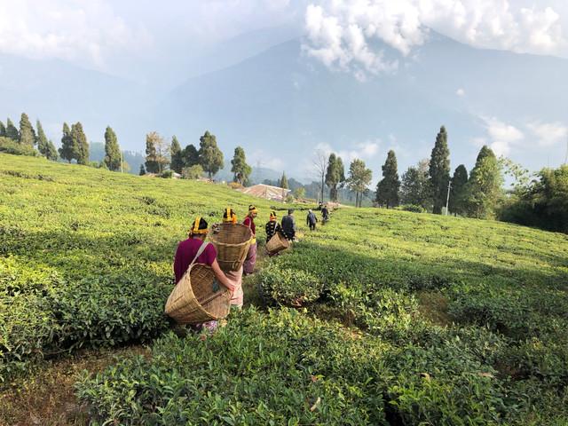 インド・シッキム州政府の公式VR動画制作・プロモーション事業