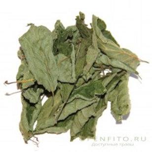 Лещина, лист (70 гр.)
