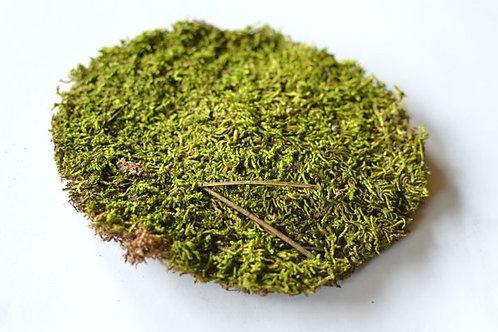 Мох зелёный (70 гр.)