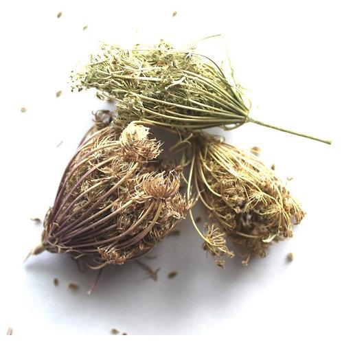Морковник, трава (70 гр.)