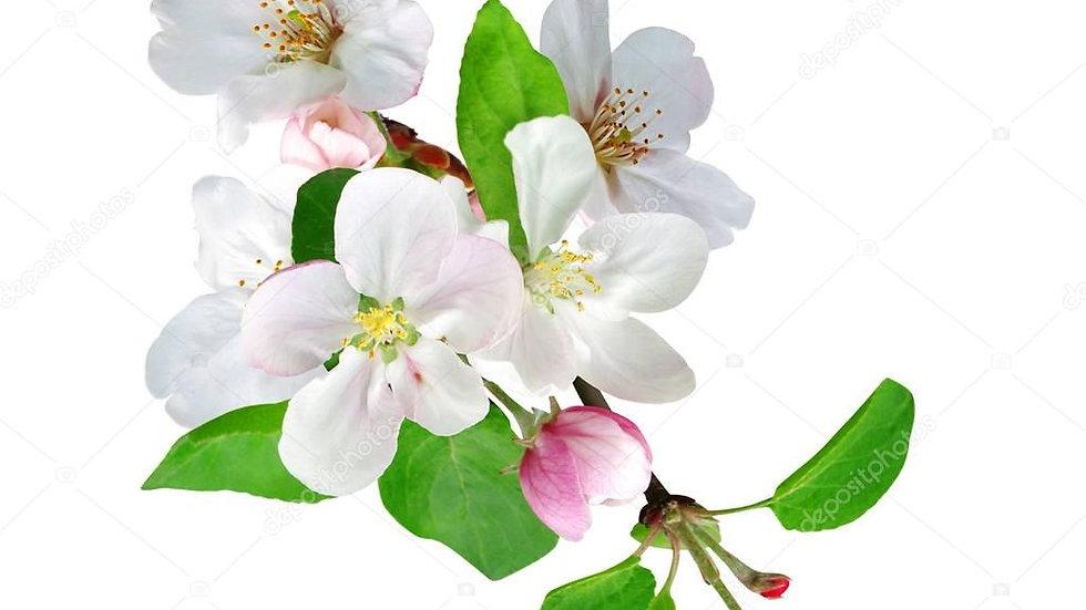 Яблоня, лист