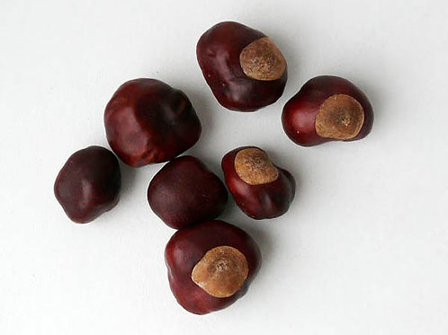 Каштан, плод (70 гр.)