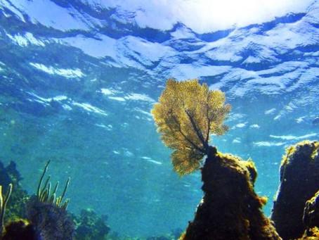 Ωκεανοί θερμότητα: Νέο ιστορικό ρεκόρ - Επιταχύνεται η υπερθέρμανσή τους