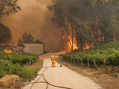 """Αυστραλία κοάλα: """"Γροθιά στο στομάχι"""" η φωτογραφία με τον πυροσβέστη στις φλόγες [pics]"""