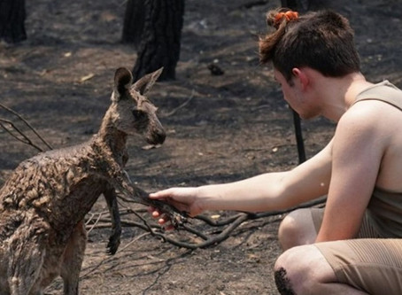 Αυστραλία φωτιά: Ραγίζει καρδιές το καγκουρό που ικετεύει για βοήθεια [vid & pics]